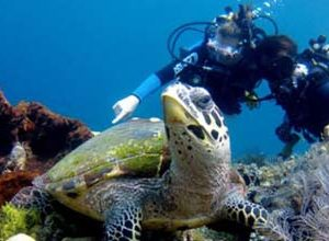Bali Diving Tour